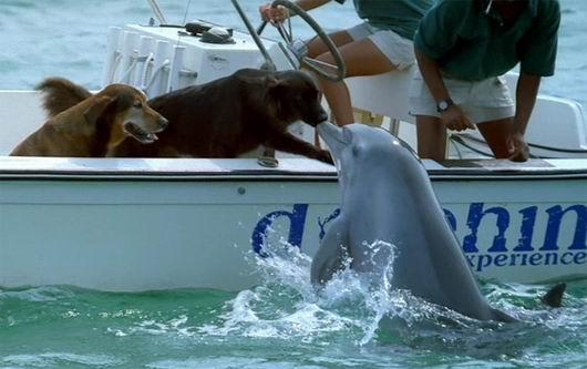 dog dolphin