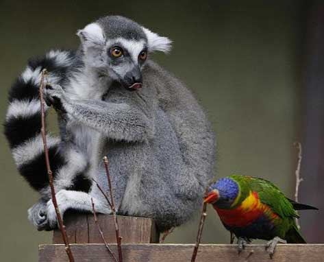lemur and bird