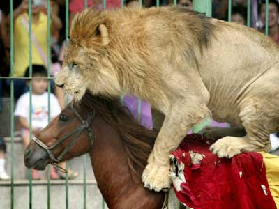 lion circus horse