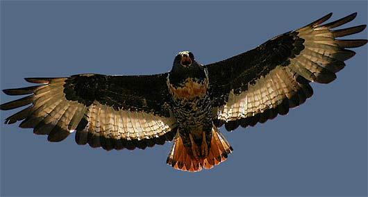 wingsout