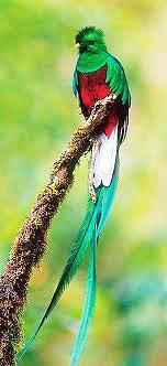 iconic american bird