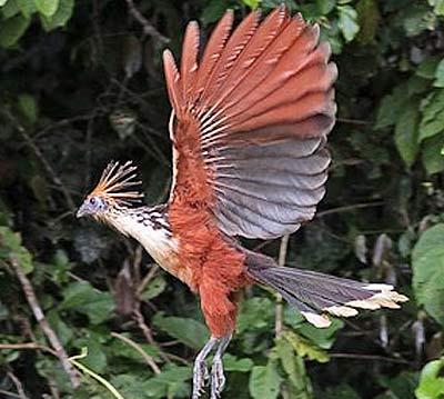 flying funky bird
