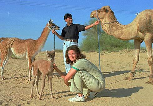 cama camel lama
