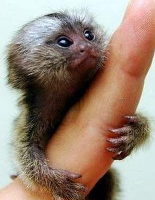 finger clinging monkey