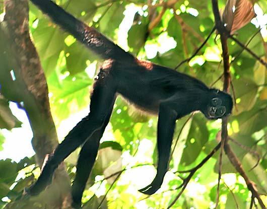tree acrobat