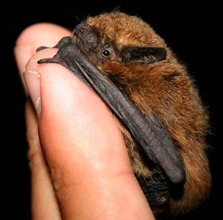 bat finger