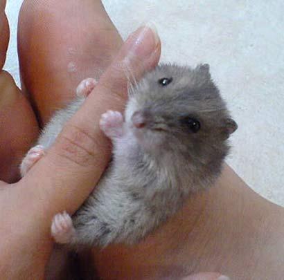 hamsterfinger