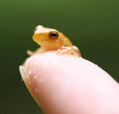 nother tiny frog
