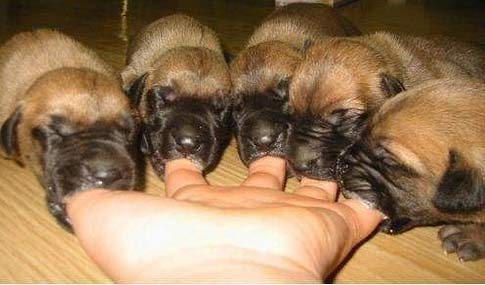 puppies fingers