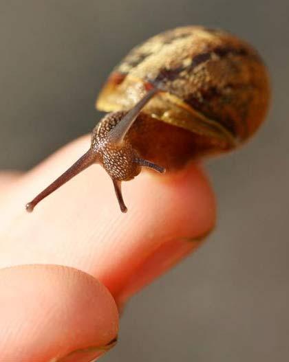 snail tiny
