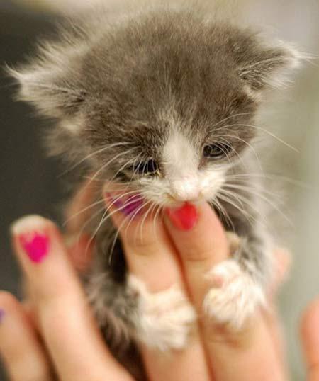 tiny kitten2