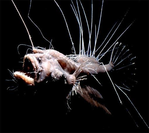 worlds most hideous fish