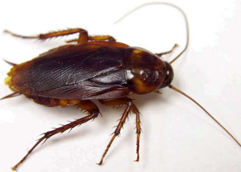 Small Kitchen Cockroaches