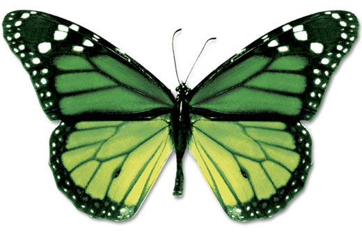 green black butterfly