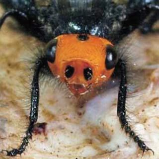 hello gomer fly