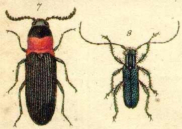 Types of Insects | Animal Pictures and Facts | FactZoo.com