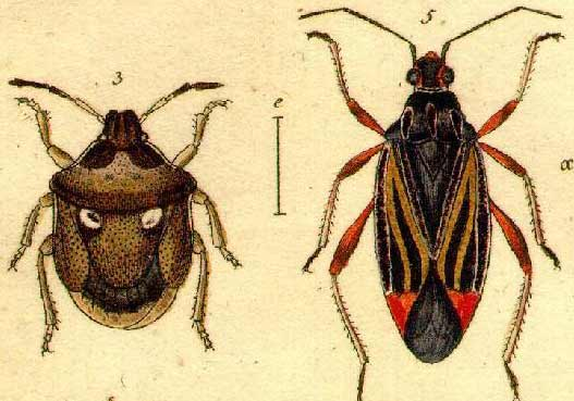 jakobs insects