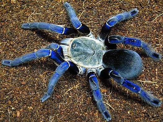 Commit error. pictures of big huge hairy spiders
