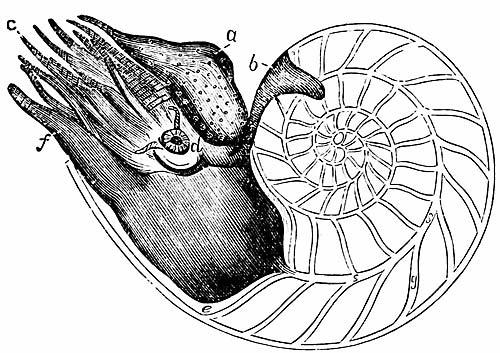 inside shell