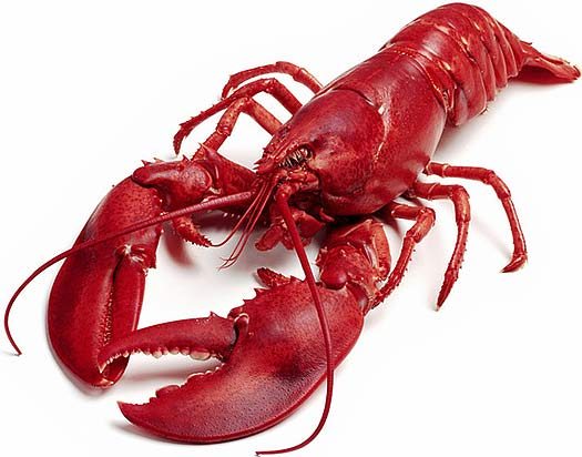 red red lobsta