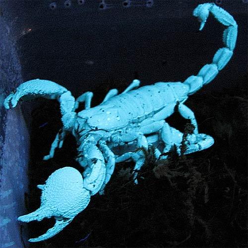 86d638241327 Emperor Scorpion – A Gentle