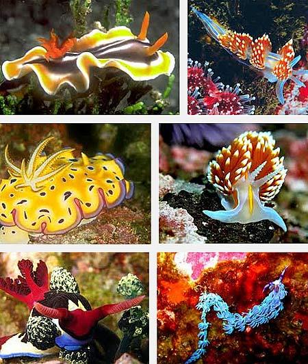 multi colored sea slug