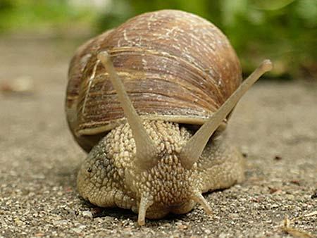 roman snail hello