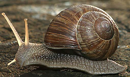 snail sun