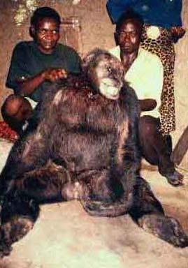 bili ape killed
