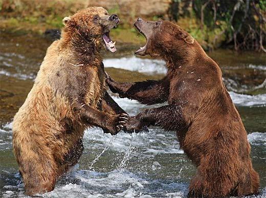 Bear Happy Hour!