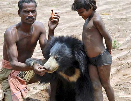 sloth bear with people