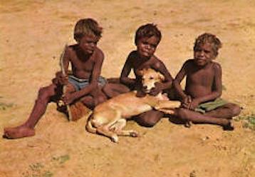 aborigines dingo
