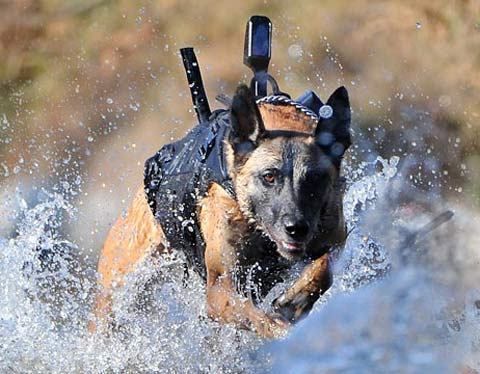 seal team 6 dog pictures