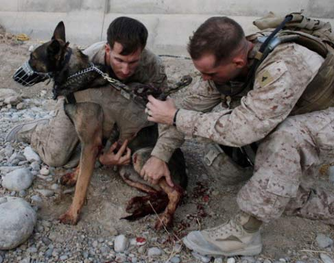 Navy Seal Dogs Captured Bin Laden | Animal Pictures and