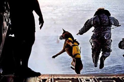 seal team 6 dogs