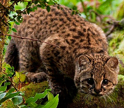 Chile Animal Pictures And Facts Factzoo Com