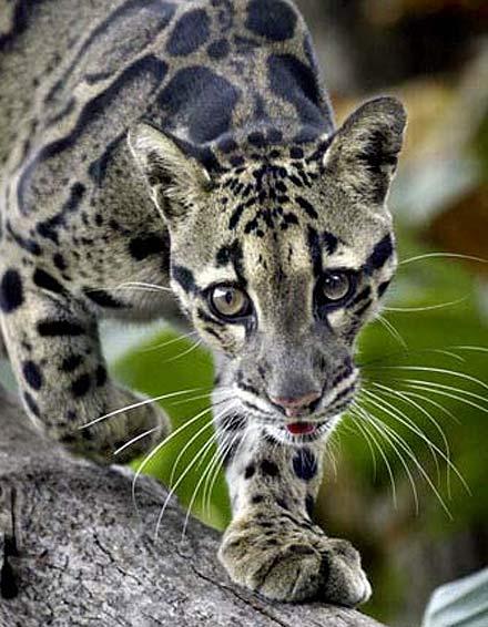spots eyes