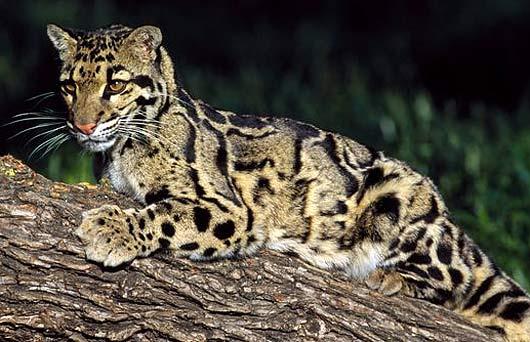 Image Result For Baby Sumatran Tiger Videos Downloada