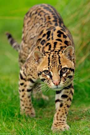 just prowling around