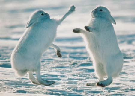 arctic fighting