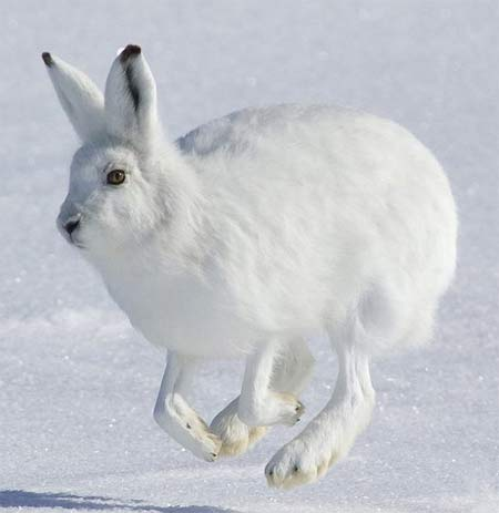 hopping snow