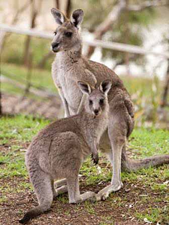 roos in the trees