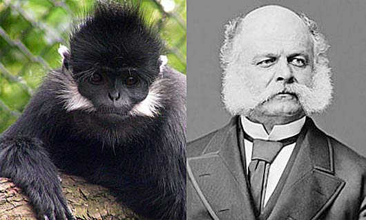 ambrose burnside monkey chops