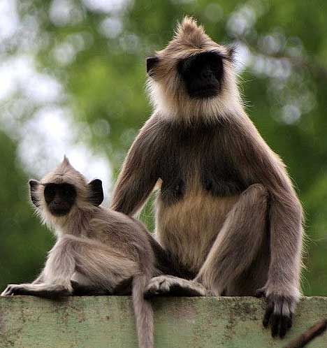 mother young hanuman