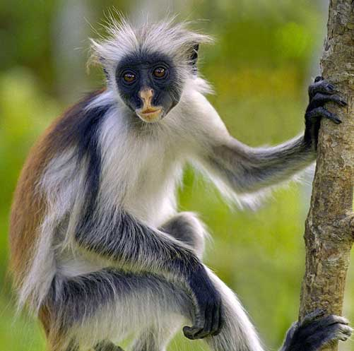 Types of Monkeys | Animal Pictures and Facts | FactZoo com