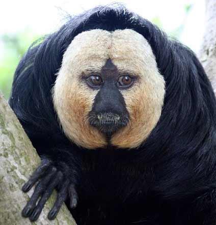 saki-monkey.jpg