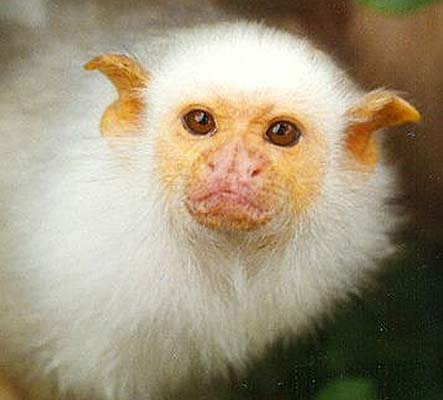 mico face