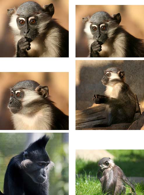 Types of Monkeys | Animal Pictures and Facts | FactZoo.
