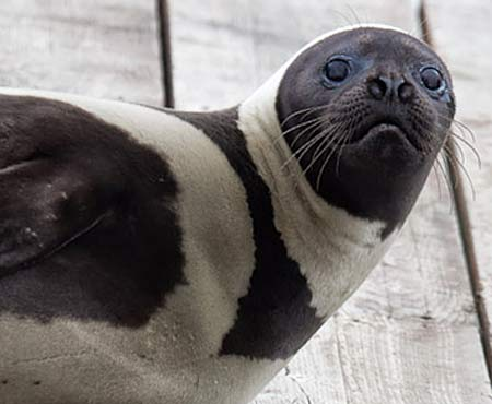 ribbon seal close