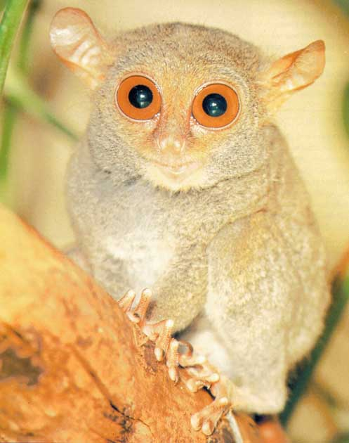 Weird Animals With Big Eyes 2